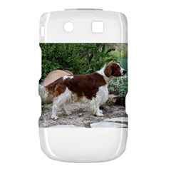 Welsh Springer Spaniel Full Torch 9800 9810