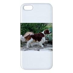 Welsh Springer Spaniel Full Apple iPhone 5 Premium Hardshell Case