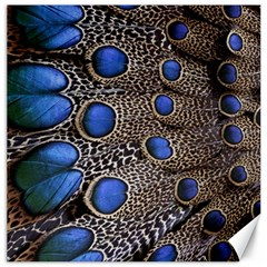 Feathers Peacock Light Canvas 20  x 20