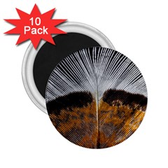 Spring Bird Feather Turkey Feather 2.25  Magnets (10 pack)