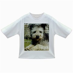 Pumi Infant/Toddler T-Shirts