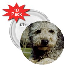 Pumi 2.25  Buttons (10 pack)