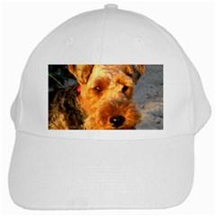 Welch Terrier White Cap