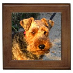 Welch Terrier Framed Tiles