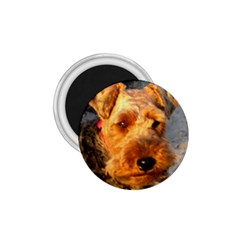 Welch Terrier 1.75  Magnets