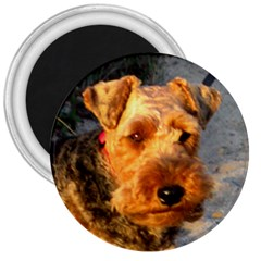 Welch Terrier 3  Magnets