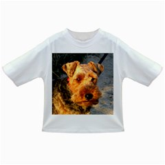 Welch Terrier Infant/Toddler T-Shirts