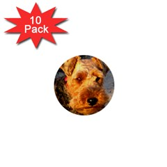 Welch Terrier 1  Mini Buttons (10 pack)