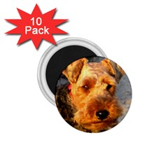 Welch Terrier 1.75  Magnets (10 pack)
