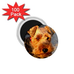 Welch Terrier 1.75  Magnets (100 pack)