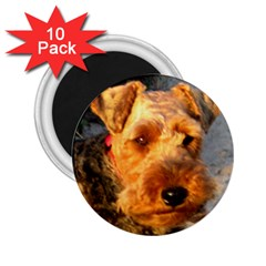 Welch Terrier 2.25  Magnets (10 pack)