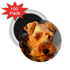 Welch Terrier 2.25  Magnets (100 pack)
