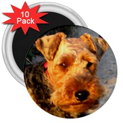 Welch Terrier 3  Magnets (10 pack)