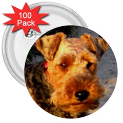 Welch Terrier 3  Buttons (100 pack)