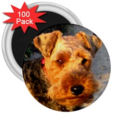 Welch Terrier 3  Magnets (100 pack)