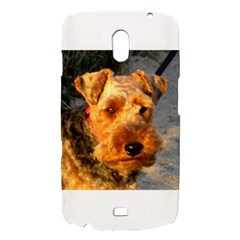 Welch Terrier Samsung Galaxy Nexus i9250 Hardshell Case