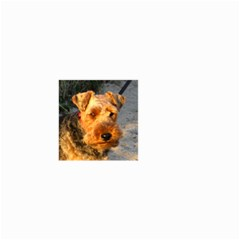 Welch Terrier Small Garden Flag (Two Sides)