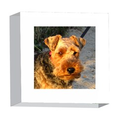 Welch Terrier 5  x 5  Acrylic Photo Blocks