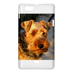 Welch Terrier Sony Xperia Miro