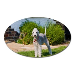 Bedlington Terrier Full Oval Magnet