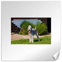 Bedlington Terrier Full Canvas 20  x 20