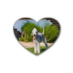 Bedlington Terrier Full Heart Coaster (4 pack)