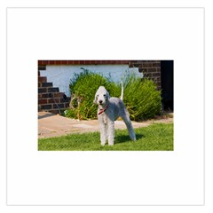 Bedlington Terrier Full Large Satin Scarf (Square)