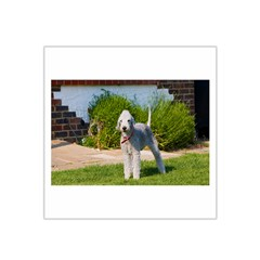 Bedlington Terrier Full Satin Bandana Scarf