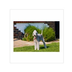 Bedlington Terrier Full Small Satin Scarf (Square)