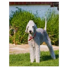 Bedlington Terrier Full Drawstring Bag (Large)