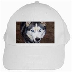 Siberian Husky Blue Eyed White Cap