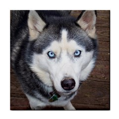 Siberian Husky Blue Eyed Tile Coasters