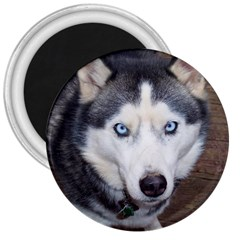 Siberian Husky Blue Eyed 3  Magnets