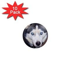 Siberian Husky Blue Eyed 1  Mini Magnet (10 pack)