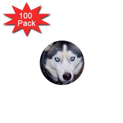 Siberian Husky Blue Eyed 1  Mini Buttons (100 pack)