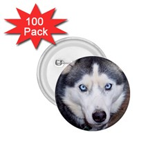 Siberian Husky Blue Eyed 1.75  Buttons (100 pack)