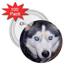 Siberian Husky Blue Eyed 2.25  Buttons (100 pack)