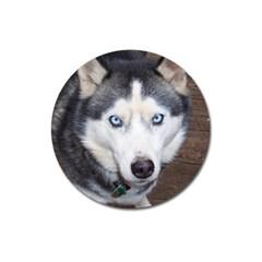 Siberian Husky Blue Eyed Magnet 3  (Round)