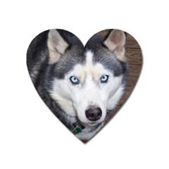 Siberian Husky Blue Eyed Heart Magnet