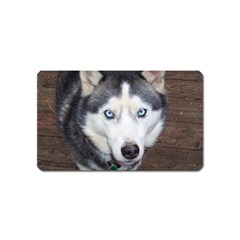 Siberian Husky Blue Eyed Magnet (Name Card)