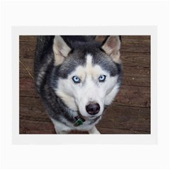 Siberian Husky Blue Eyed Small Glasses Cloth