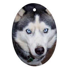 Siberian Husky Blue Eyed Oval Ornament (Two Sides)