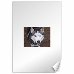 Siberian Husky Blue Eyed Canvas 12  x 18