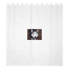 Siberian Husky Blue Eyed Shower Curtain 66  x 72  (Large)