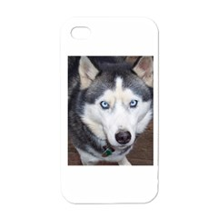 Siberian Husky Blue Eyed Apple iPhone 4 Case (White)