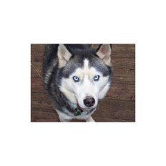 Siberian Husky Blue Eyed YOU ARE INVITED 3D Greeting Card (8x4)