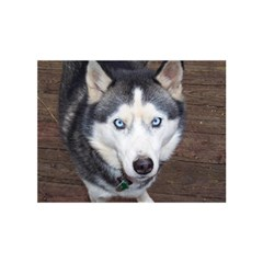Siberian Husky Blue Eyed Birthday Cake 3D Greeting Card (7x5)