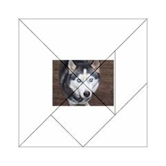 Siberian Husky Blue Eyed Acrylic Tangram Puzzle (6  x 6 )