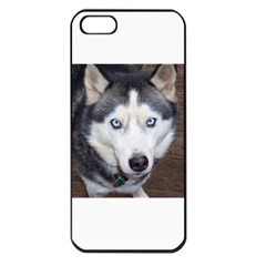 Siberian Husky Blue Eyed Apple iPhone 5 Seamless Case (Black)