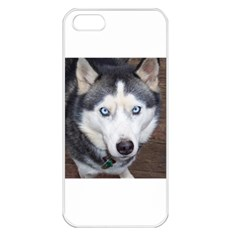 Siberian Husky Blue Eyed Apple iPhone 5 Seamless Case (White)